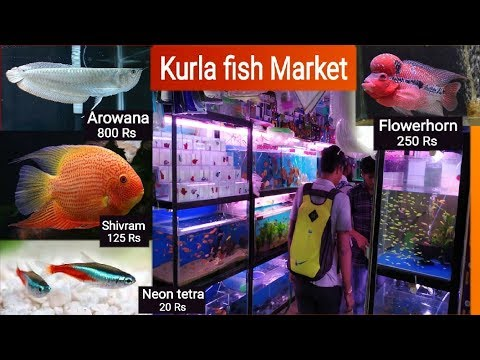 Kurla Fish Market, Pari Fish Aquarium // Fish Names With Price