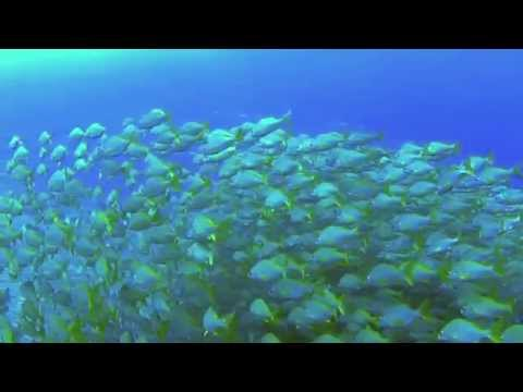 Canary Diving Adventures 2015