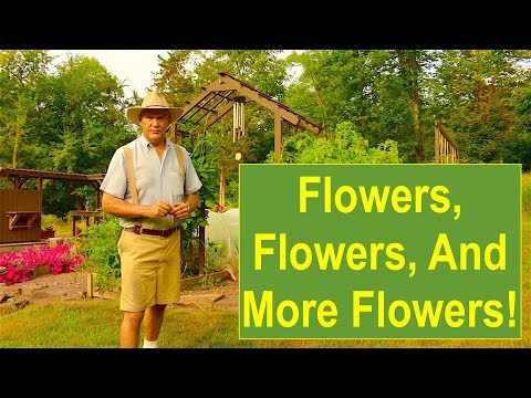 Early-Summer Organic Garden Tour 2015: Flowers, Flowers, and More Flowers!