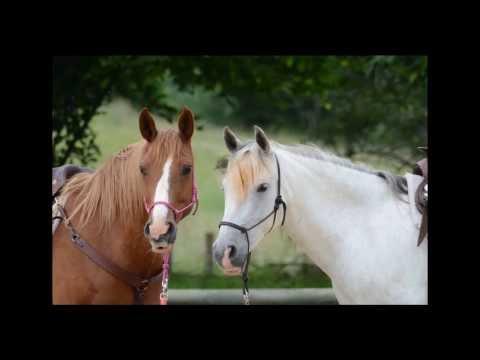 -  Sonidos caballos  relinchando  -  Sounds horses neighing  -