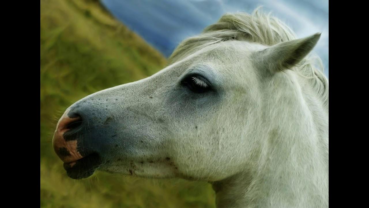 sonido de caballo relinchando para celular