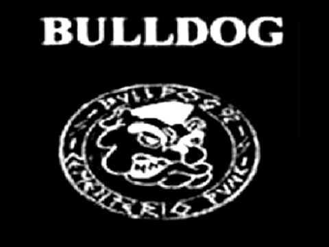 bulldog cementerio punk