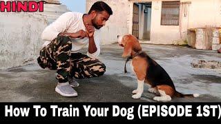 Beagle Dog Training Series  Episode 1st || All Dog Training Basics Tips & Tricks