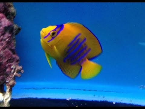 Rare Marine Fish at Maidenhead Aquatics @ Windsor