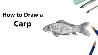 How to Draw a Carp Fish with Pencils [Time Lapse]