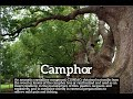 How to Say Camphor in English? | What is Camphor? | How Does Camphor Look?