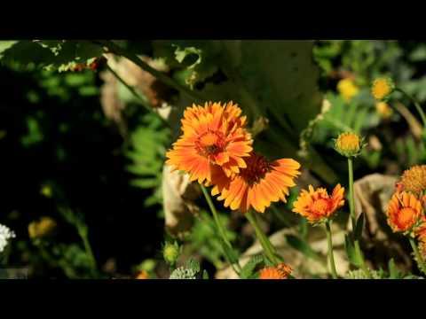 Nature India Arie