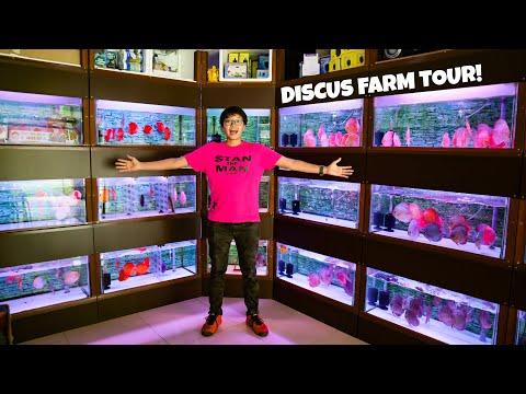 AMAZING DISCUS FISH STORE TOUR In SINGAPORE!! Chai Discus Farm