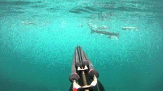 лаврак, підводне полювання