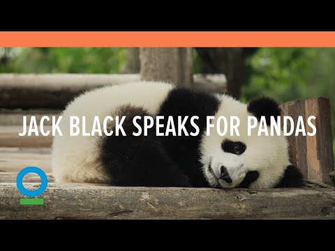 Jack Black Speaks for Pandas - Conservation International (CI)