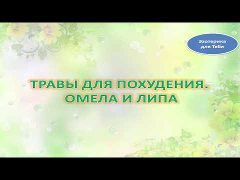 Омела белая - лечебные свойства и противопоказания