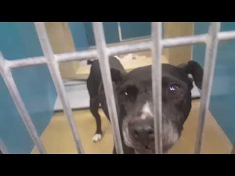 BUGSY: San Diego North Shelter, Carlsbad, CA - ID#: A1814639 / Tag#: N449