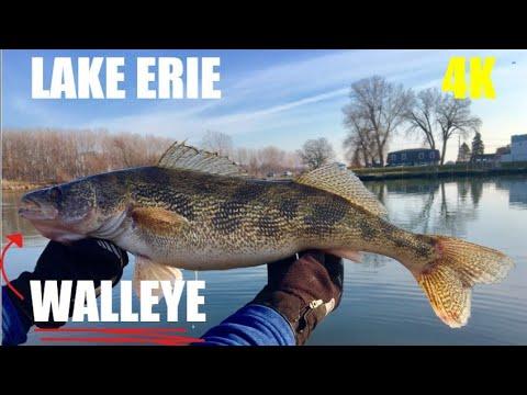 Walleye - Lake Erie  Boat TROLLING Winter Charter Fishing 4K