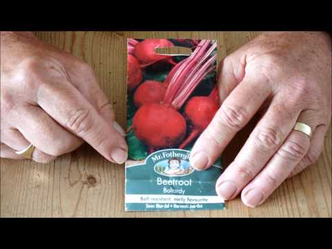 HGV How to grow Beetroot (Beets) mystery solved Start to Finish