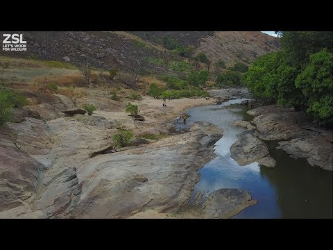 Monitoring Freshwater Fish Species In Madagascar