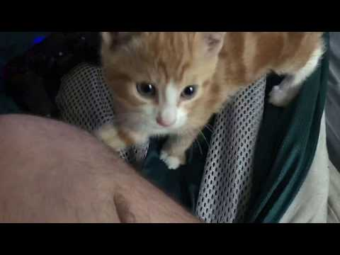 Meet my 7 week old Kitten!