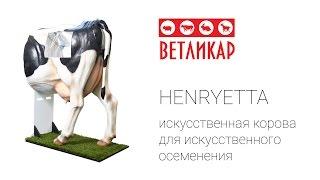 Искусственное осеменение коров. Обучение осеменаторов с помощью Henryetta