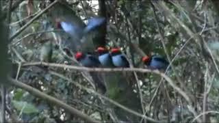 새들의 춤과 노래