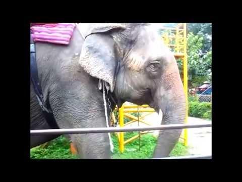 An Elephant Of 80 Years In Jawalakhel Zoo Kathmandu Nepal-SabiSaugat