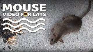 MOUSE VIDEO FOR CATS TO WATCH - CAT TV MICE.