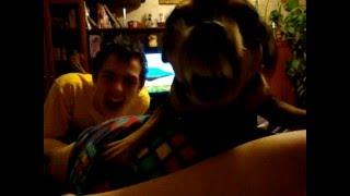 Тосямба Собака которая любит командовать Песик командор!!!