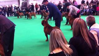 Crufts 2015 - Dogue De Bordeaux Showing