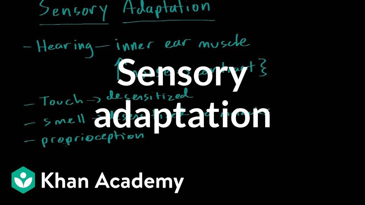 Human sensory reception