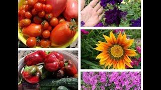 Цветущий и плодоносящий сад в конце июля. Моя прекрасная дача