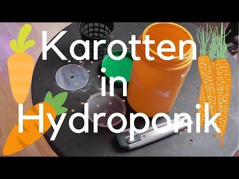 Karotten In Hydroponik ! Funktioniert Das ?