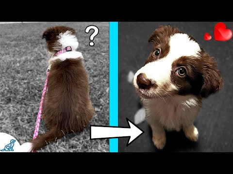 Teach Your Puppy To Listen With 5 Simple Training Changes!
