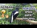 Kacer Gacor Nembak Ngeroll Speed Rapat Durasi Panjang Cocok Buat Pancingan Kacer Malas Bunyi  Mp3 - Mp4 Download
