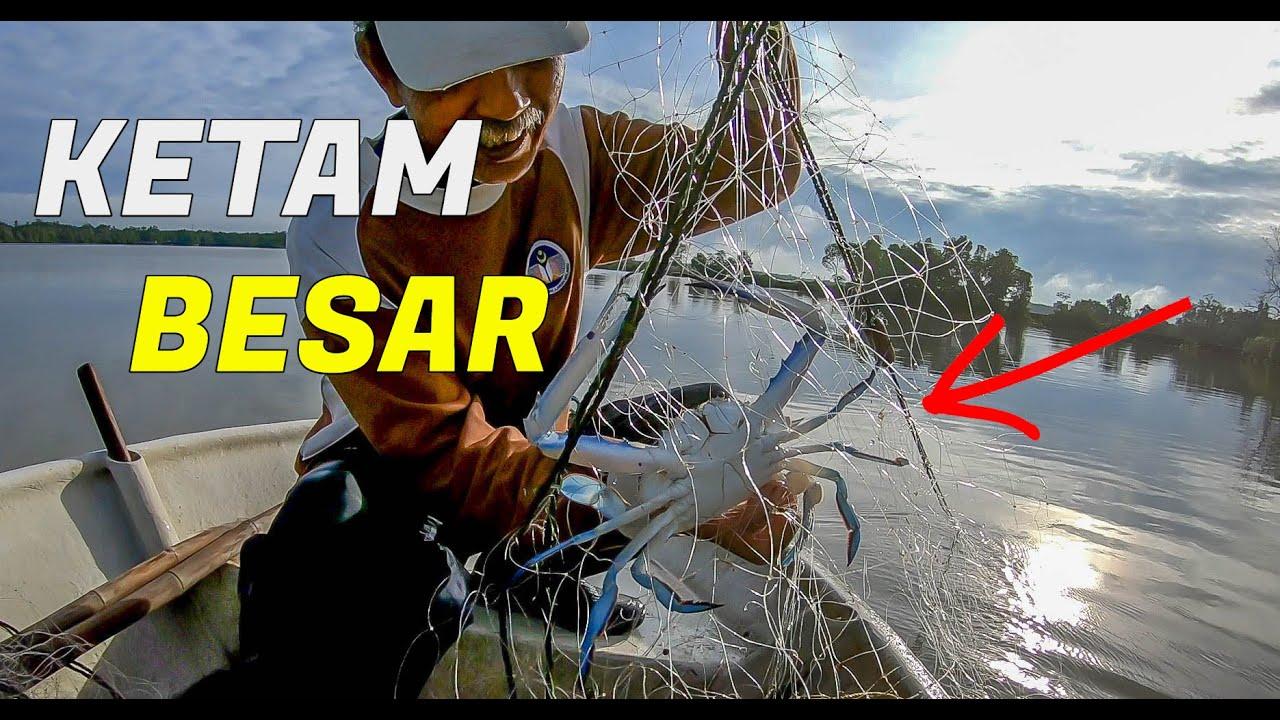 Menjaring KETAM musim HUJAN hasilnya...Crab Fishing Malaysia
