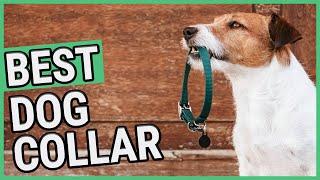 Best Dog Collar | TOP 7 Dog Collars (2020) 🐶 ✅
