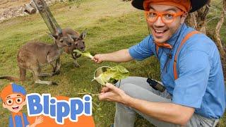Blippi Visits San Diego Zoo Safari Park | Animal Videos For Kids | Educational Videos For Kids