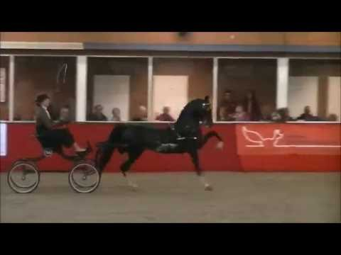 Demi van Nispen with Hackney Horse Magic Eclipse Flash dance Winner CC Ambt Delden 2016 Holland