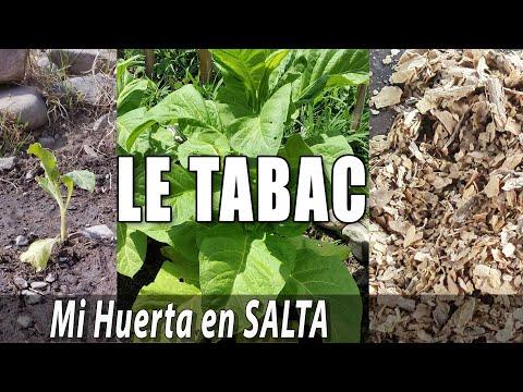 TABAC #1, Culture, Entretien, Croissance et première clope