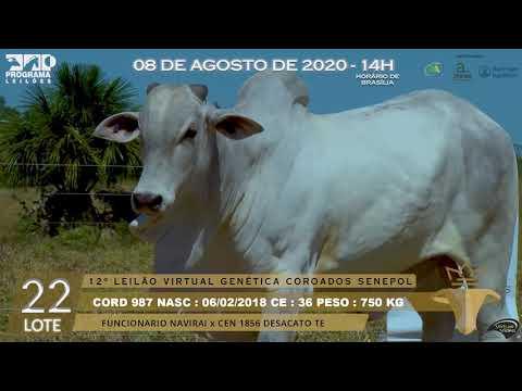 LOTE 22 CORD 987