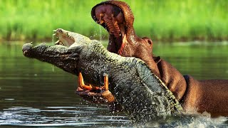 Top 10 Animals That Hate Each Other