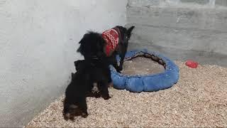 Собака Марта охраняет свой садик