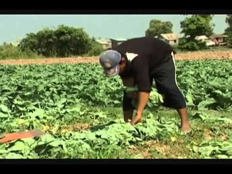 Kandal Province - How to Made Beans Bubbles - Hello Cambodia - Tour - part 02