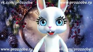 Дорогая Подруга С Новым Годом! Креативное поздравление от ZOOBE Зайки Домашней Хозяйки