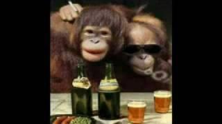 Ik drink zo graag een bier met henkie