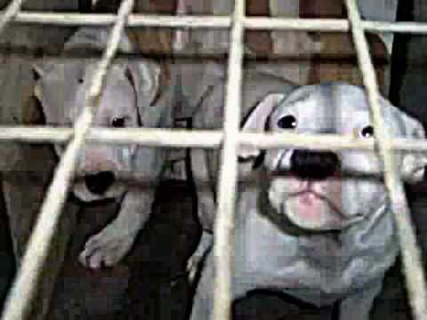 Newport Beach Civic Center Dog Park - PUPPY MILL FEDERAL CANINE TORTURE COUNCIL - CANINE ABUSE