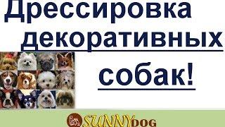 дрессировка декоративных собак самые важные секркты