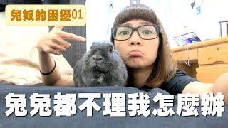 【侑敏頻道】兔子不親人/為什麼我家兔寶都不給我抱!