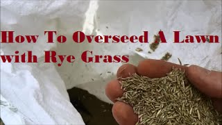 [How To Overseed Your Lawn] with Rye Grass - [Overseeding An Existing Lawn] to thicken up your grass