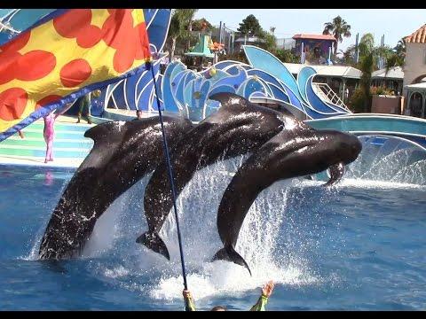 Blue Horizons: Pilot Whale Finale (6/20/14)
