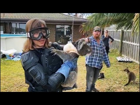 video: Journalist falls for 'drop bear' prank as she dons protective gear to handle cuddly koala