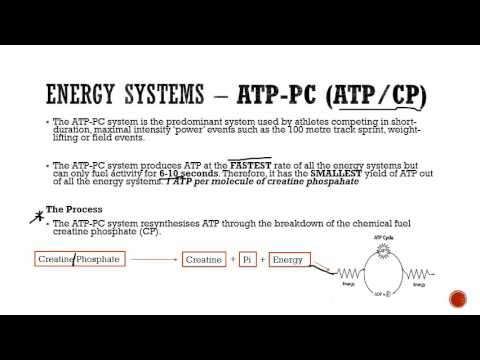 Food Fuels and Energy Systems Part 2