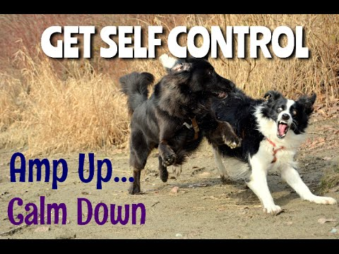 Dog Training - Over Excited & Rambunctious Dogs